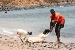 Dakar, Senegal (2008)